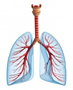 what is the respiratory system how does it work inogen