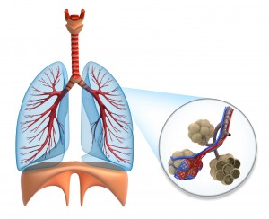 What is the respiratory system how does it work inogen alveoli respiratory system respiratory systems how does the respiratory system work ccuart Choice Image